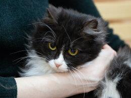 Кошки - Красавица Буковица ждёт любящую семью , 0