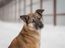 Собаки - Санча, собака, 0