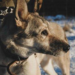 Собаки - Пёсик ищет дом на доживание , 0
