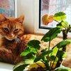 Рыжая кошка в добрые руки по цене даром - Кошки, фото 2