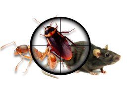 Дезинфицирующие средства - Полное уничтожение тараканов, клопов, блох,…, 0