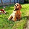 Радостный щенок 🐶 по цене 30000₽ - Собаки, фото 3