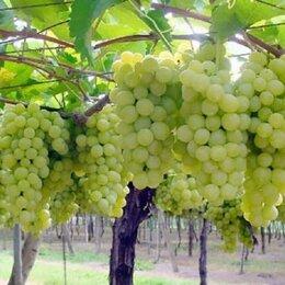 Другое - Участок с Виноградниками 56 ГА, 0