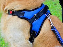 Шлейки  - Шлейка ошейник и поводок для собаки или кошки, 0