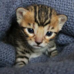 Кошки - Пятнышко , 0