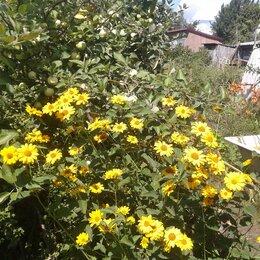 Рассада, саженцы, кустарники, деревья - продам рассаду цветов-многолетников, 0