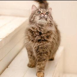Кошки - Мурчалка, 0