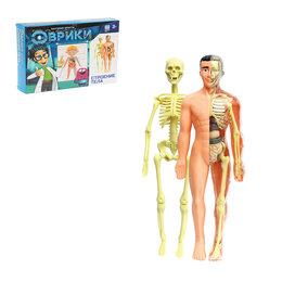Сертификаты, курсы, мастер-классы - ЭВРИКИ Научный опыт  Строение тела, 0