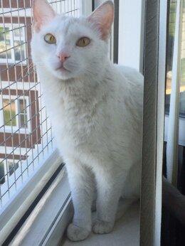 Кошки - Безрадостная жизнь одной бедной кошечки...., 0