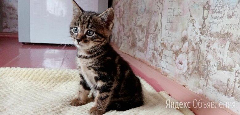 Кошки по цене 100₽ - Кошки, фото 0