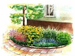 Рассада, саженцы, кустарники, деревья - Клумба № 20,Цветы у дома, 0