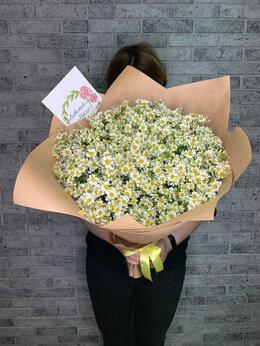 Цветы, букеты, композиции - Ромашки букет , 0