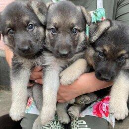 Собаки - Щенки ВЕО, 0