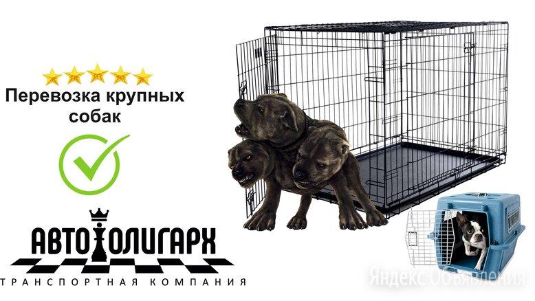 Перевозка крупных собак междугородняя. по цене 30₽ - Транспортировка, переноски, фото 0