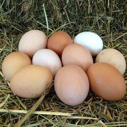 Продукты - продам домашнее яйцо, 0