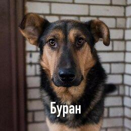 Собаки - Собака метис , 0