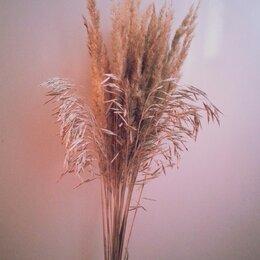 Цветы, букеты, композиции - Сухоцветы с поля, 0