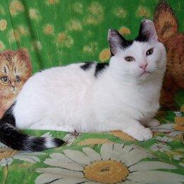 Кошки - Хозяйственный кот ищет ответственную семью!!! , 0