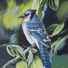 Картины, постеры, гобелены, панно - Голубая сойка. Птица,картина,пастель,яркий, 0