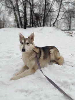 Собаки - Собака в семью, в дар, 0