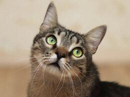 Кошки -  Возьмите меня домой. а .. (большой кот в добрые…, 0