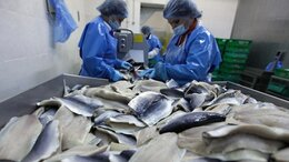 Разнорабочие - Разнорабочие на рыбное производство (вахта в…, 0