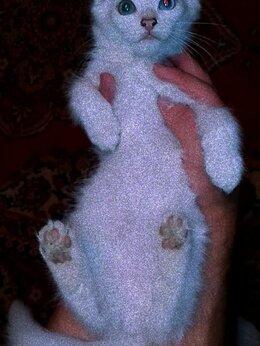 Кошки - Даром, котёнок белый, пушистый, глаза разного…, 0
