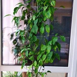 Комнатные растения - Мандарин, 0