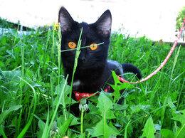 Кошки - Стерилизованная молодая кошечка в добрые руки, 0