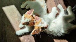 Животные - Котята мальчики в добрые руки, 0