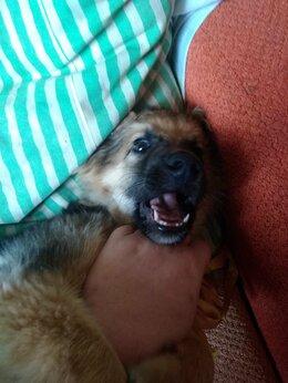 Собаки - Отдам в хорошие руки, 0