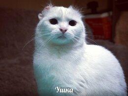 Кошки - Ушка , кошечка с особенными ушками., 0