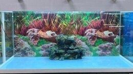 Аквариумы, террариумы, тумбы - Аквариум 500 литров., 0