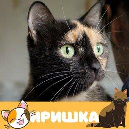 Кошки - Кошка Иришка, 0
