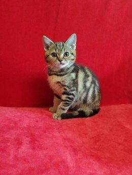 Кошки - Замуррчательный мальчик - яркого мраморного окраса, 0