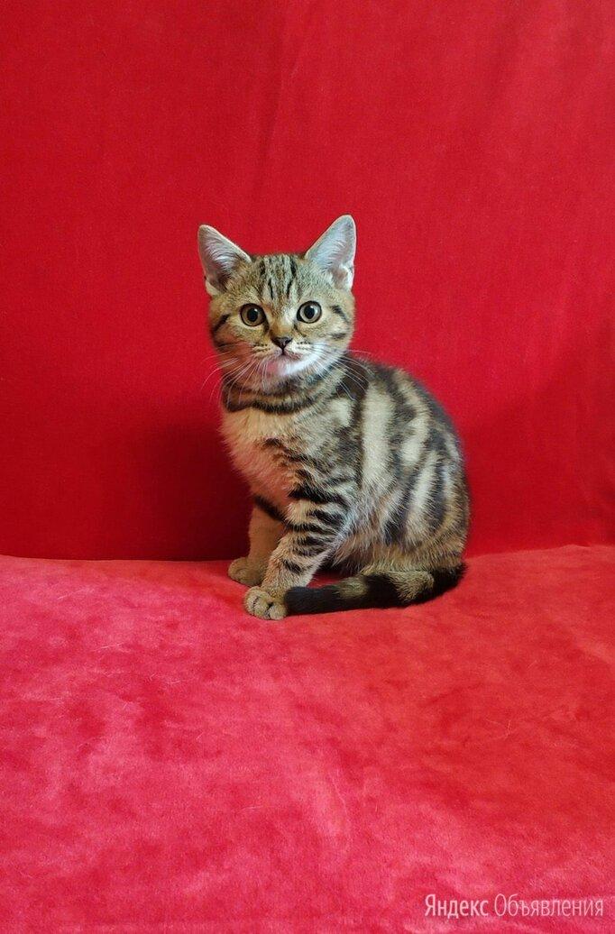 Замуррчательный мальчик - яркого мраморного окраса по цене не указана - Кошки, фото 0