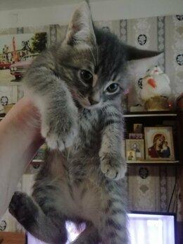 Кошки - Котята, 2 мес., ищут себе добрую семью. 2…, 0