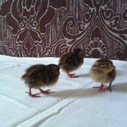 Птицы - Перепела манжурцы, эстонцы. Яйцо, 0