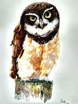 Картины, постеры, гобелены, панно - Сова совёнок акварель картина анималистика птица, 0