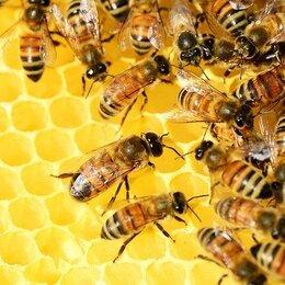 Сельскохозяйственные животные и птицы - пчелопакеты с доставкой, 0