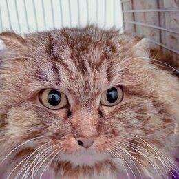 Кошки - Сибирская кошка Нафаня, 0