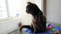 Кошки - Кошка Алиса ищет дом, 0
