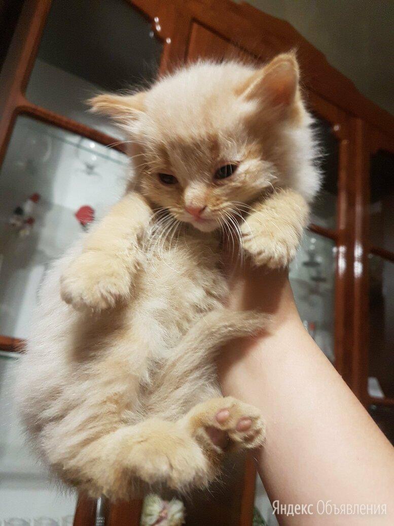 Отдам двух котиков в добрые руки  по цене даром - Кошки, фото 0