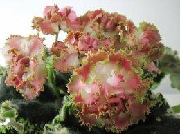 Комнатные растения - Шикарные фиалки, 0