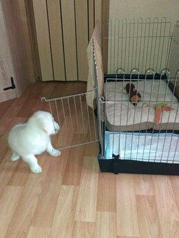 Клетки, вольеры, будки  - Вольер для собак, 0