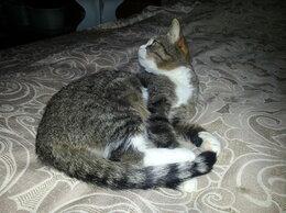 Кошки - Ищем хозяна коту, 0