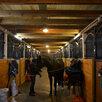 Денники для лошадей по цене 35000₽ - Товары для сельскохозяйственных животных, фото 14