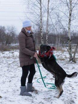 Собаки - Мудрый Захар, 0
