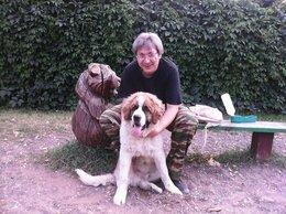 Услуги для животных - КИНОЛОГ: профессиональная дресировка собак, 0