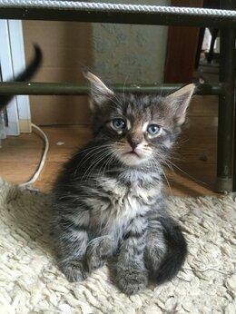 Кошки - отдам пасхальных котят рождённые 2 мая  в добрые…, 0